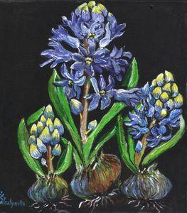 Night hyacinth