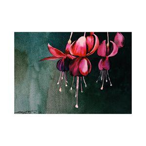 Low-hanging Fuchsia