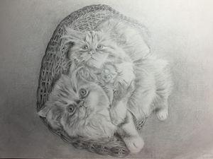 2 Cute Cats in a Basket