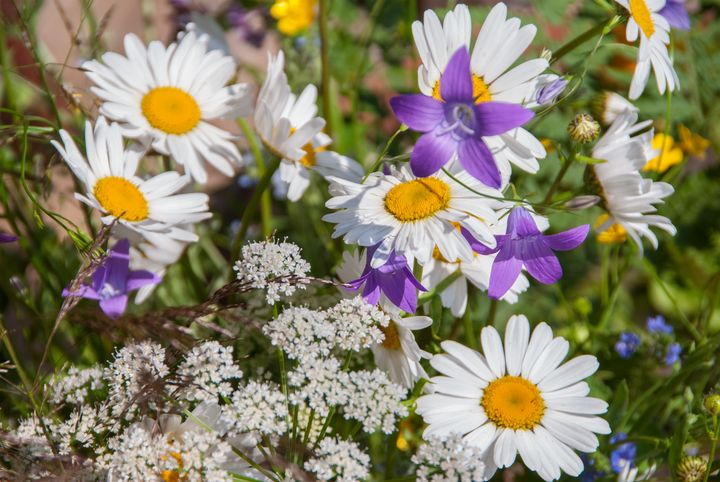 Wildflowers in the sunny morning - Art-Stream
