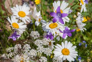 Wildflowers in the sunny morning