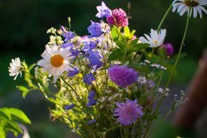 Beautiful meadow flowers