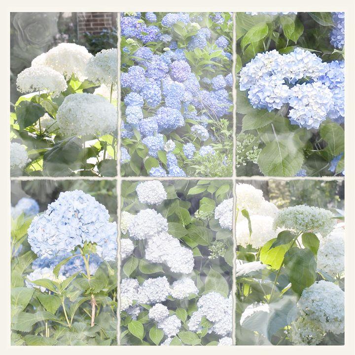 Le Bleu Blanc (The Blue White) - Nan Mac
