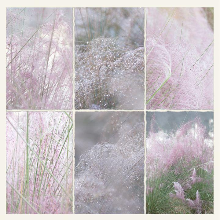 Le Denteler Pink Muhly Grass - Nan Mac