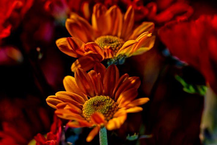 Autumn Floral Twins - Nan Mac