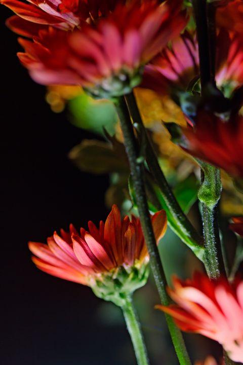 Autumn Floral Family - Nan Mac