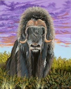 Arctic Muskox - Darrell Chocolate Fine Art