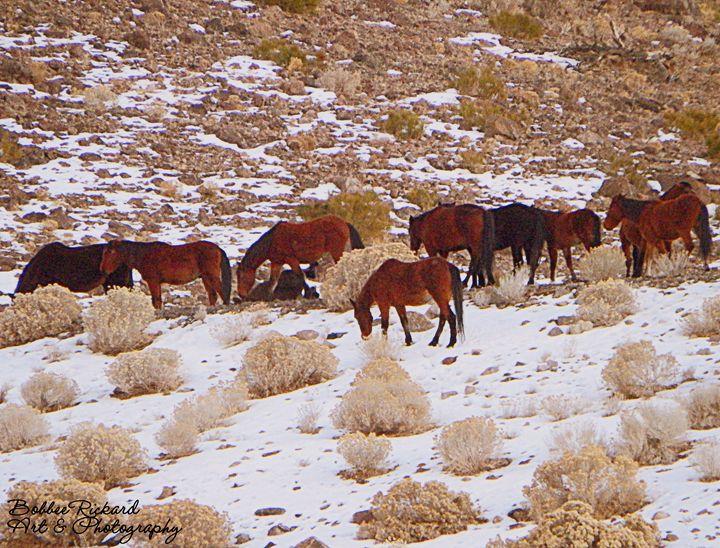 Herd of Wild Horses - Bobbee Rickard Art & Photography