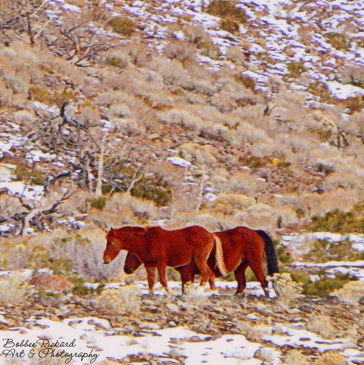 Wild Horses on the Range - Bobbee Rickard Art & Photography