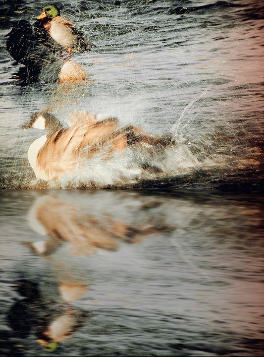 Stop Splashing - Bobbee Rickard Art & Photography