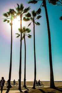 Bikes and Palm Trees
