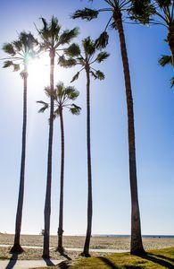 Palms on Venice