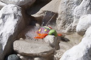 A colored turtle