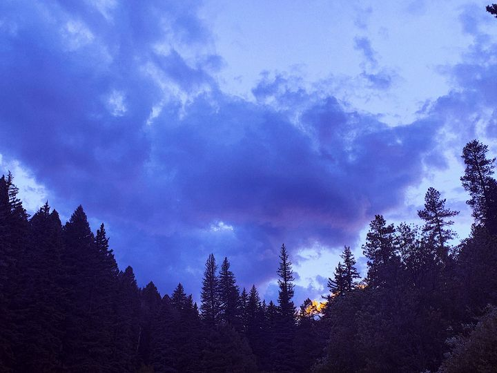 Forest Silhouette - Kat Sky Ash Art & Photography