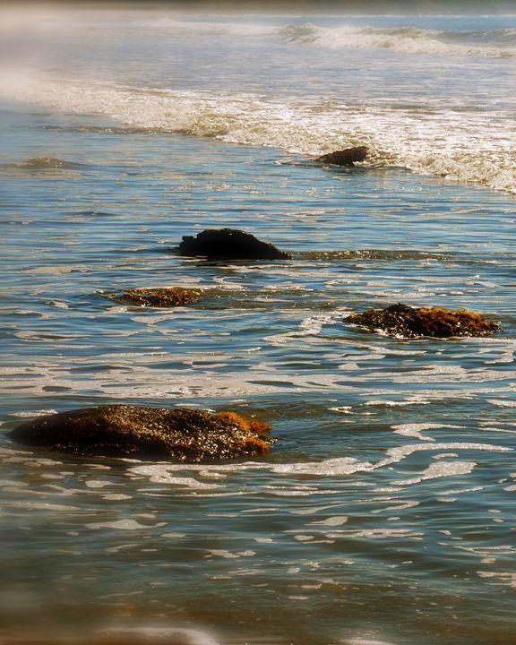 Shores of New Zealand - Codye Reystead