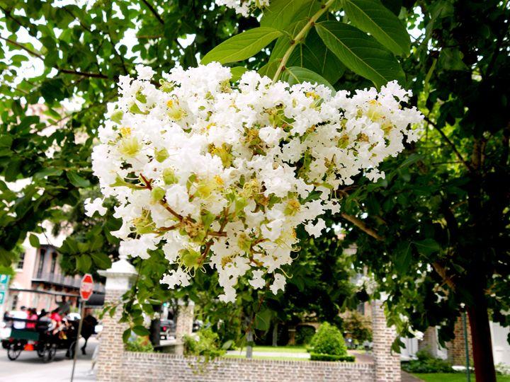 Flowers in Charleston - Taylor Harrison