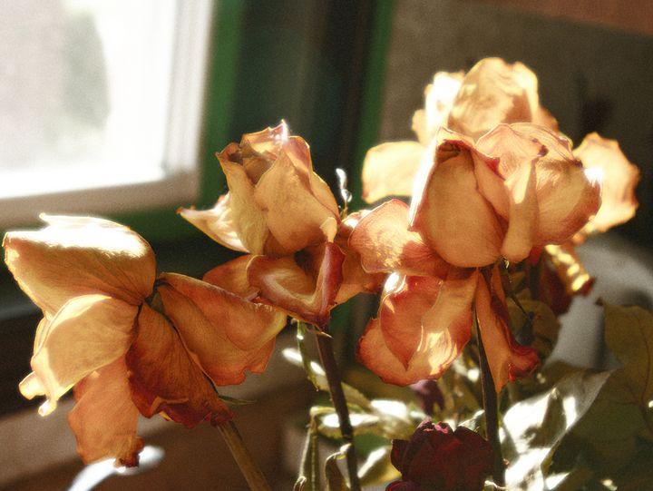 Yellow Roses - LeyDanArts