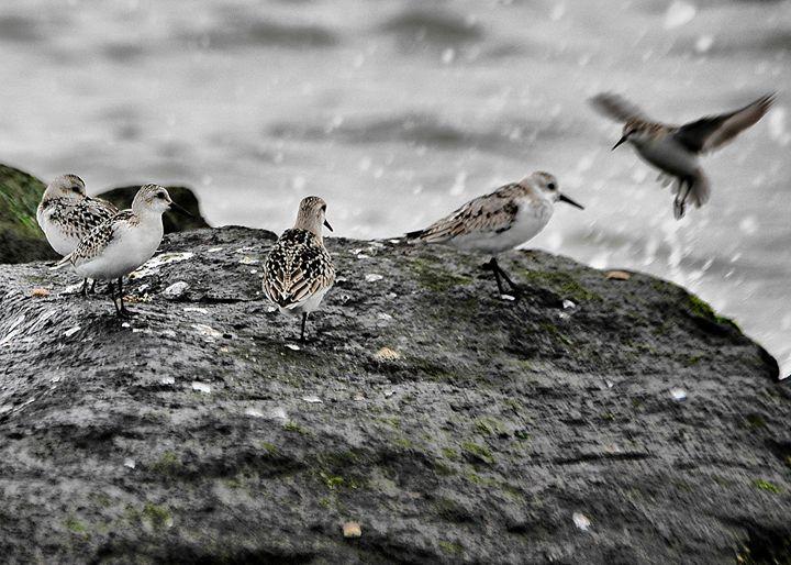 Birdies - PhillySnaps