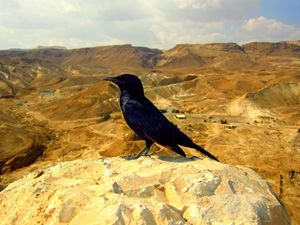 Regal Bird Atop Masada