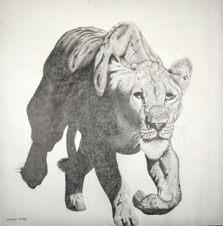 Prying Lioness - Wildlife art