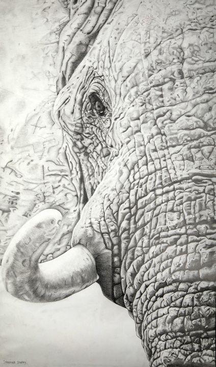 African Elephant - Wildlife art