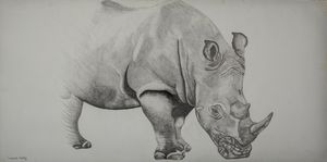 African Rhino - Road to Extinction