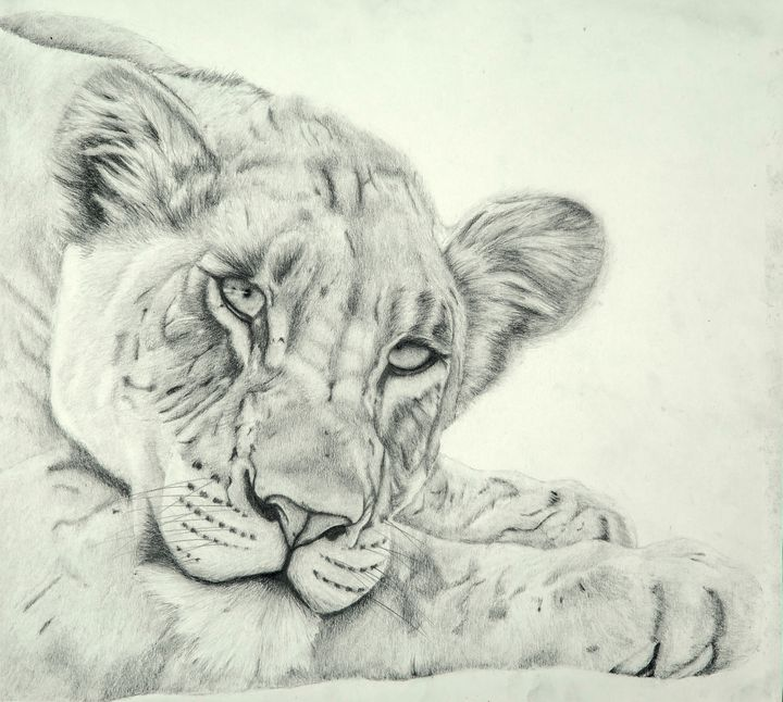 Resting Lioness - Wildlife art