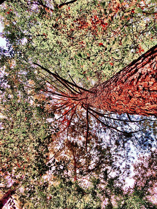 Red Tree - Digitals