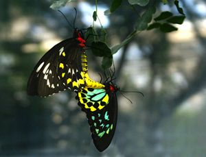 Butterflies in Love - David Russell Photography