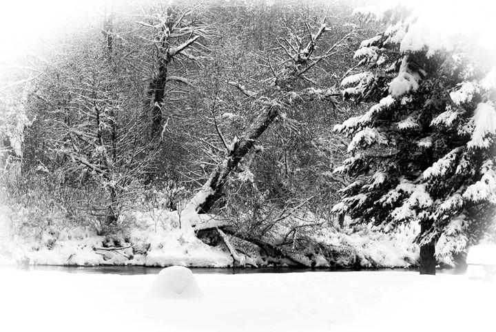 Winter Tree - David Russell Photography