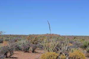 Arizonian Desert