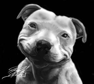 Smile, Pitbull - HMCNEILART