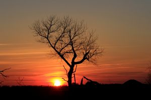 Sunset Tree Silhouette in Kansas