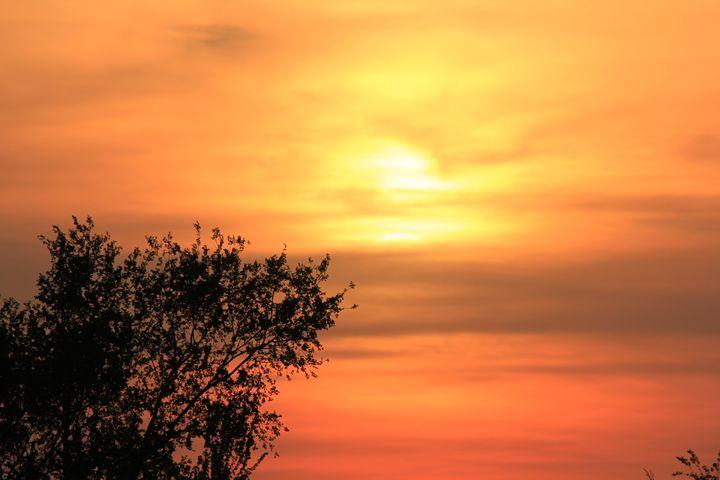 Kansas Orange Sunset with Tree's - Robert D Brozek