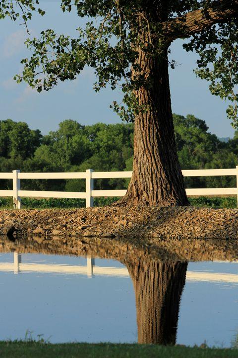 Reflections in a Pond - Robert D Brozek