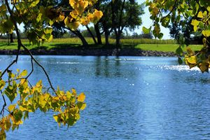 Kansas Fall Leaves with blue water