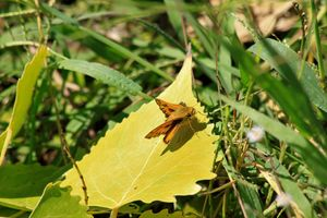 Colorful Moth on a Leaf