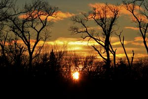 Kansas Golden clouds with tree's