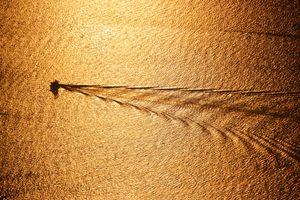 Golden Wake