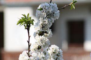 Blooming - Goran PHOTO