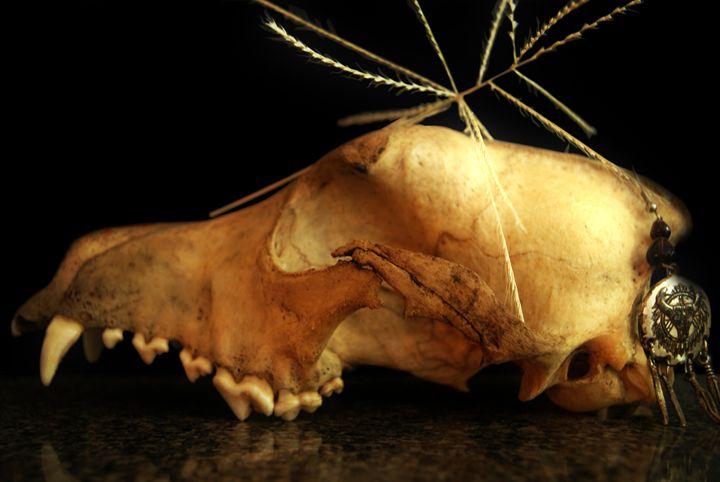 Coyote Skull - Deborah Zaragoza
