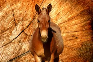 Horse Portrait in Photography
