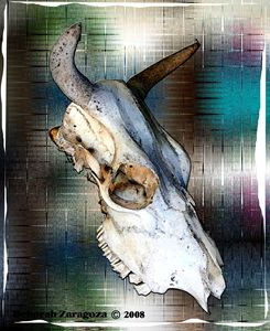 Cow Skull in Color Digital Art