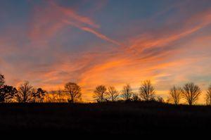 Whitetail Sunrise