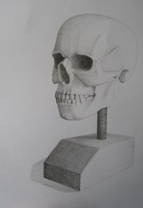 Skull live drawing