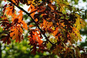 Autumn Tooling: Eagle Point Park. IA