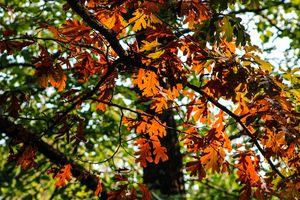 Autumn Tooling:Eagle Point Park, IA