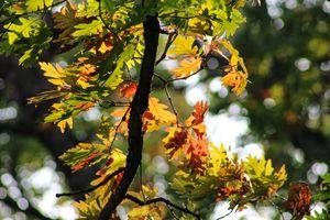 Autumn Tooling: Eagle Point Park, IA