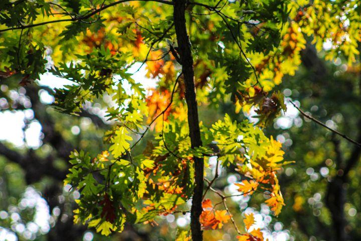 Autumn Tooling: Eagle Point Park, IA - Vickielynne
