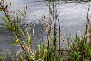 Autumn Tooling: Heritage Pond